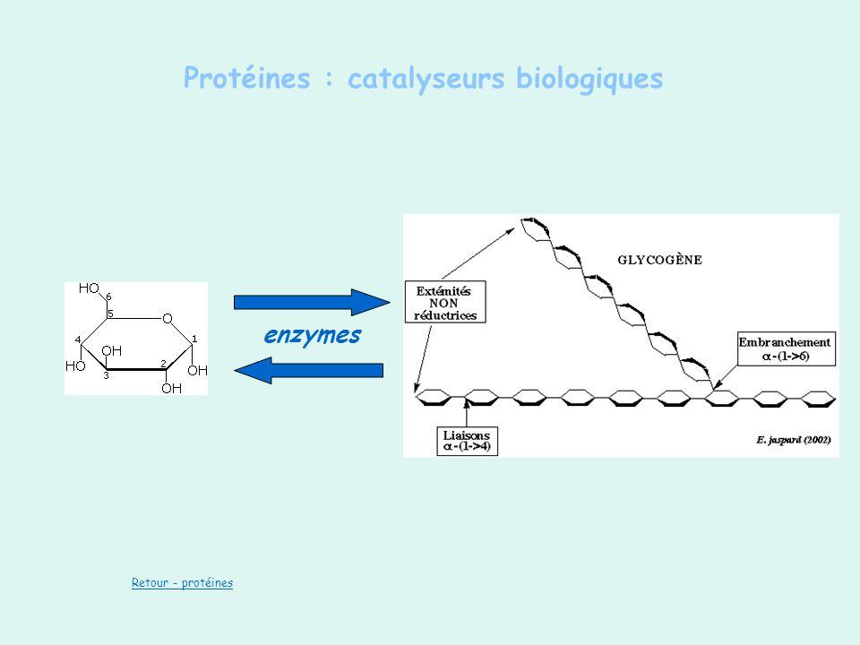 Protéines : catalyseurs biologiques