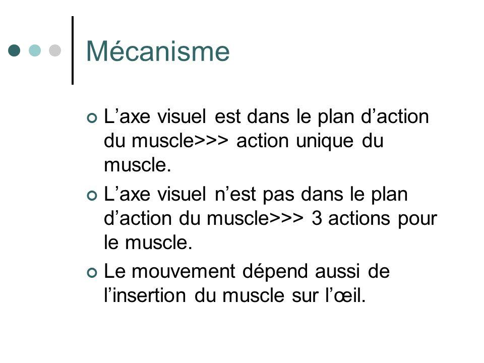 Mécanisme L'axe visuel est dans le plan d'action du muscle>>> action unique du muscle.