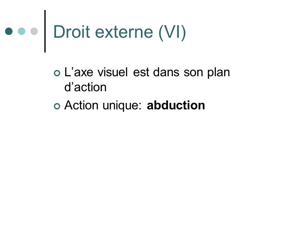 Droit externe (VI) L'axe visuel est dans son plan d'action
