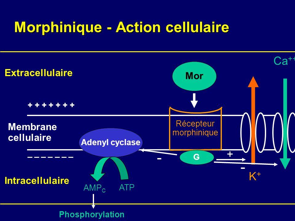 Morphinique - Action cellulaire