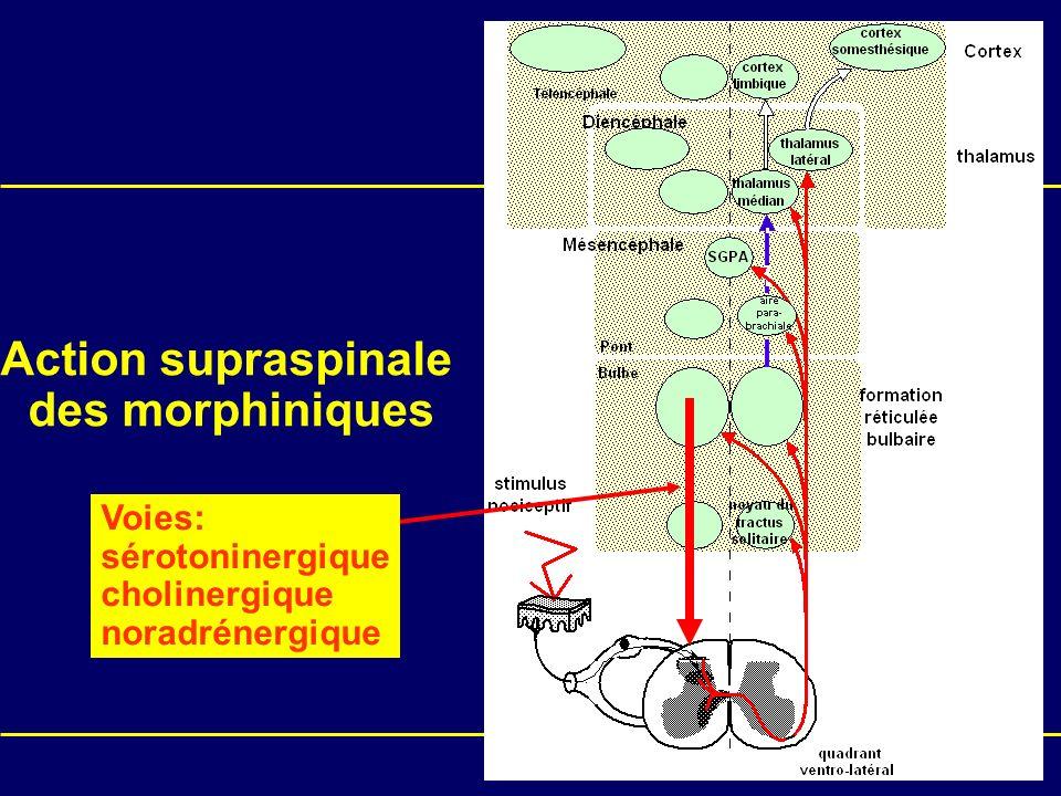 Action supraspinale des morphiniques