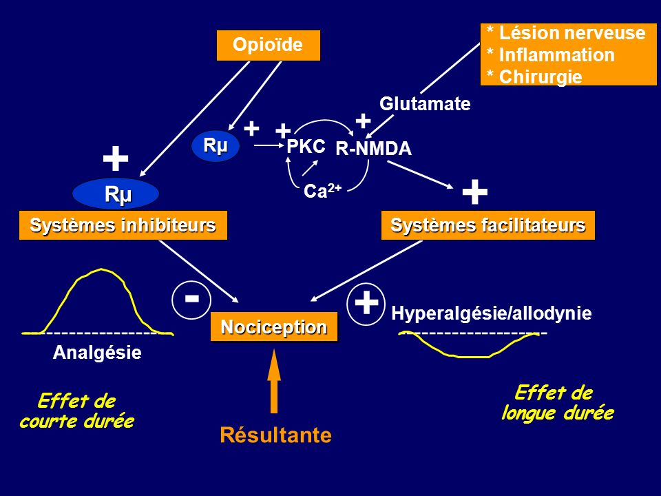 Hyperalgésie/allodynie Systèmes facilitateurs