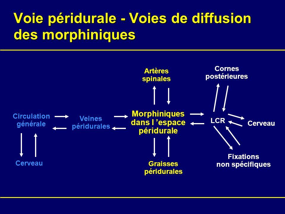 Voie péridurale - Voies de diffusion des morphiniques