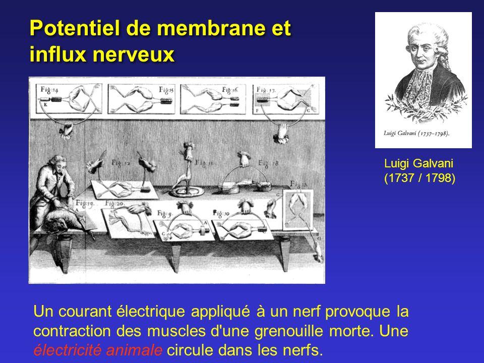 Potentiel de membrane et influx nerveux
