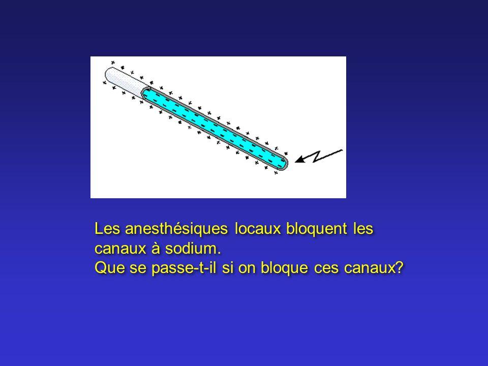 Les anesthésiques locaux bloquent les canaux à sodium