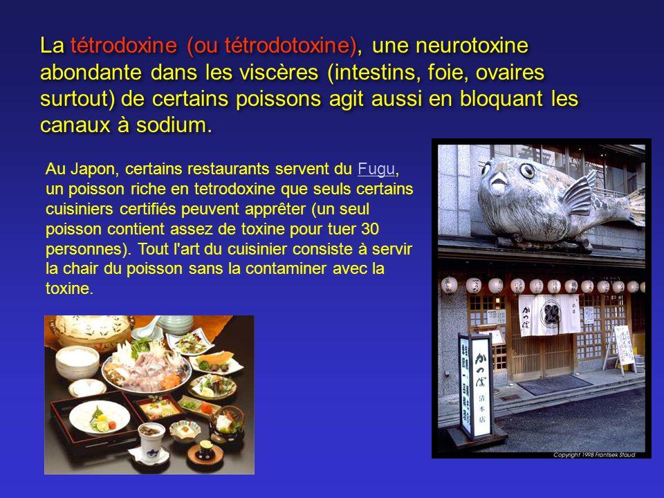 La tétrodoxine (ou tétrodotoxine), une neurotoxine abondante dans les viscères (intestins, foie, ovaires surtout) de certains poissons agit aussi en bloquant les canaux à sodium.