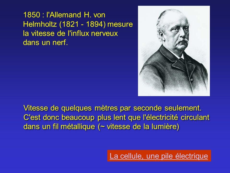 1850 : l Allemand H. von Helmholtz (1821 - 1894) mesure la vitesse de l influx nerveux dans un nerf.