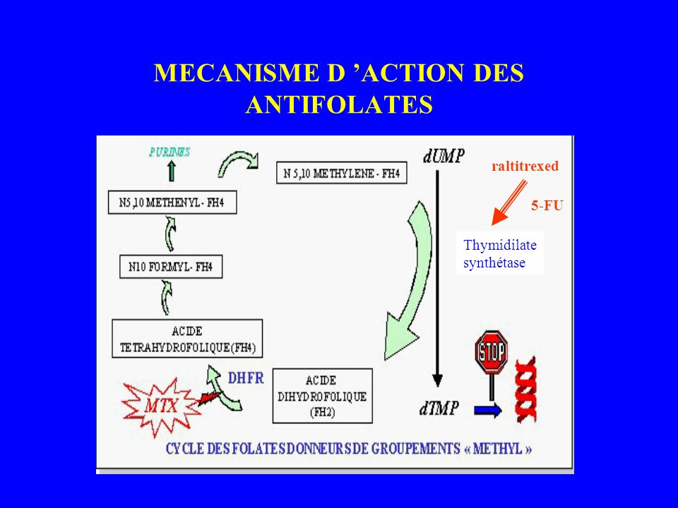 MECANISME D 'ACTION DES ANTIFOLATES