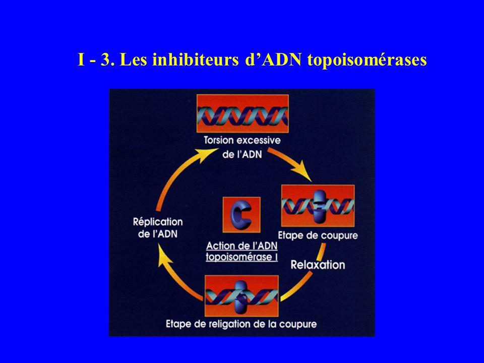I - 3. Les inhibiteurs d'ADN topoisomérases