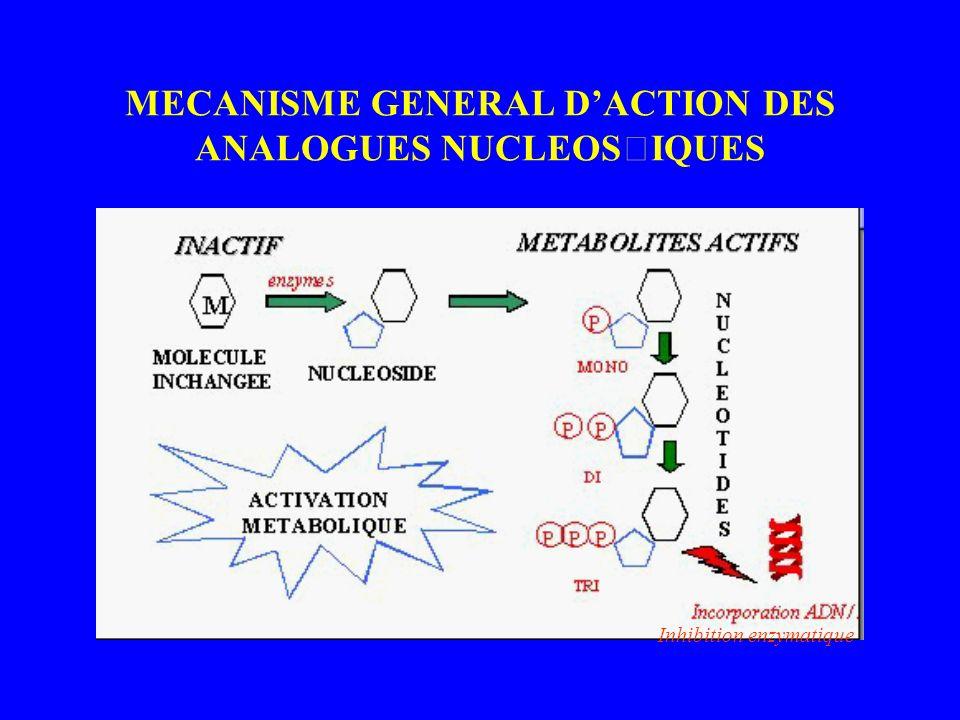 MECANISME GENERAL D'ACTION DES ANALOGUES NUCLEOSIQUES