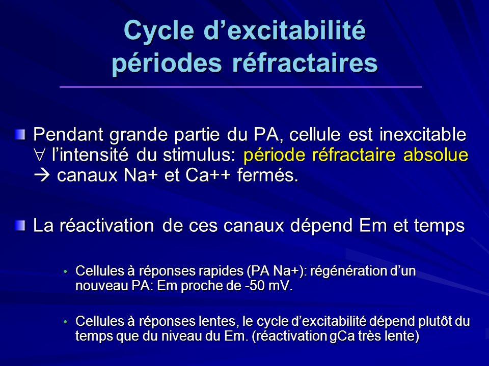 Cycle d'excitabilité périodes réfractaires