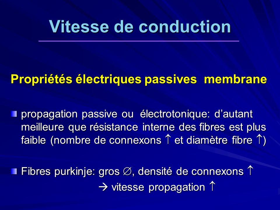 Vitesse de conduction Propriétés électriques passives membrane