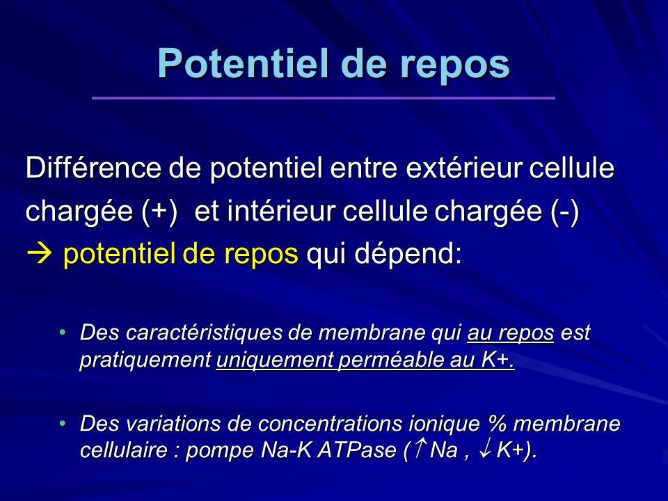 Potentiel de repos Différence de potentiel entre extérieur cellule