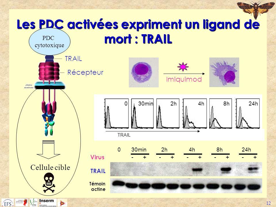 Les PDC activées expriment un ligand de mort : TRAIL