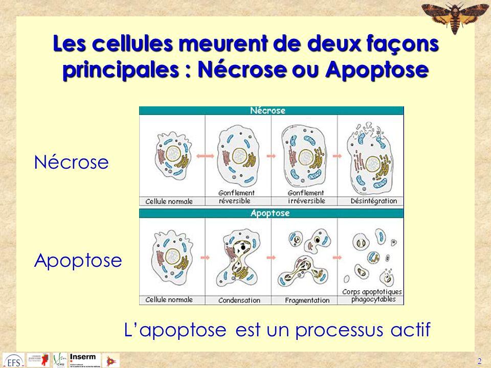 Les cellules meurent de deux façons principales : Nécrose ou Apoptose