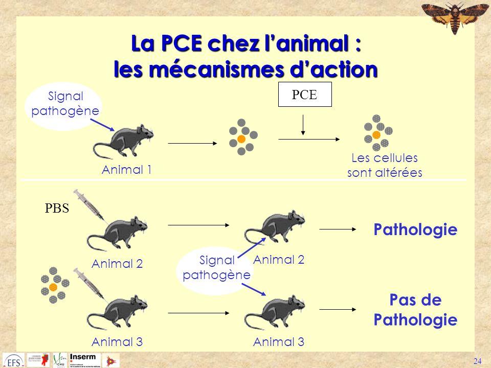 La PCE chez l'animal : les mécanismes d'action