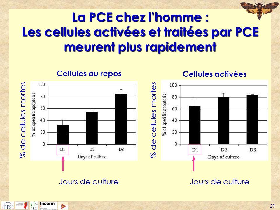 La PCE chez l'homme : Les cellules activées et traitées par PCE meurent plus rapidement