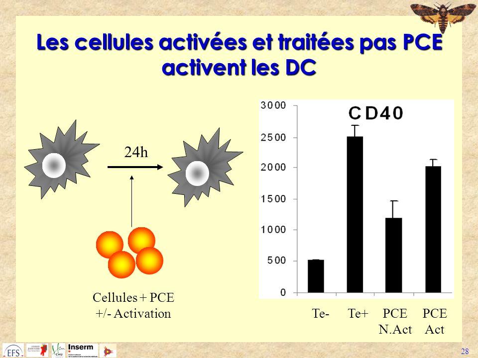 Les cellules activées et traitées pas PCE activent les DC