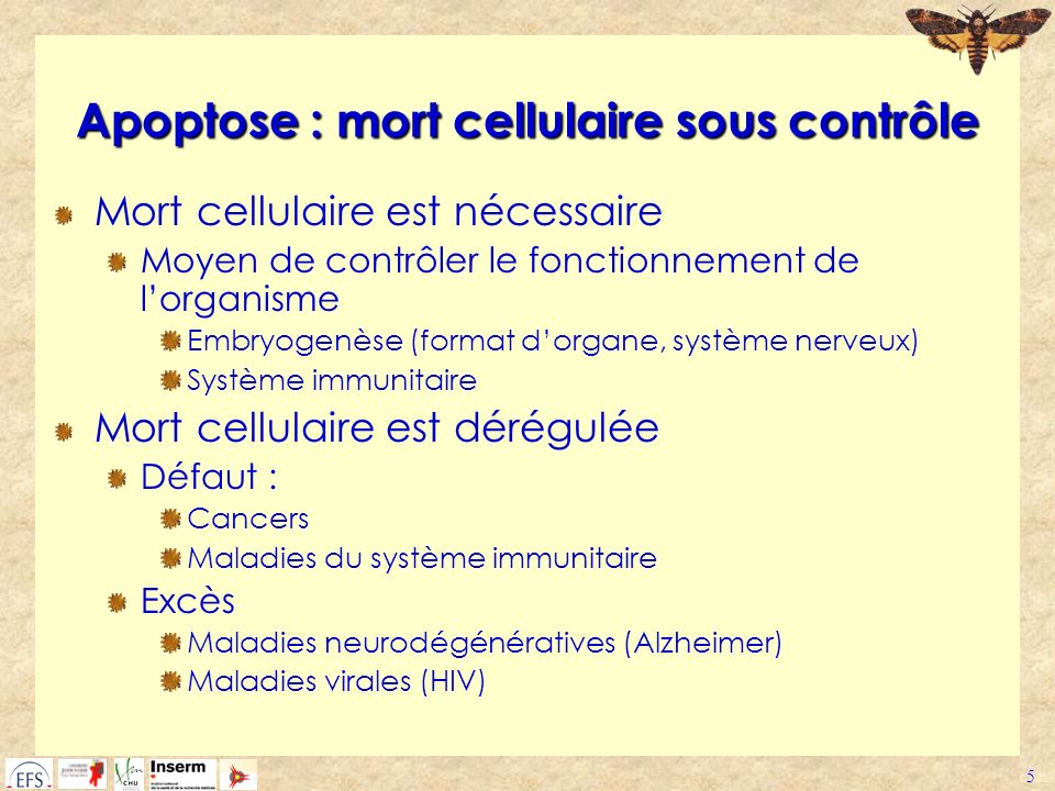 Apoptose : mort cellulaire sous contrôle