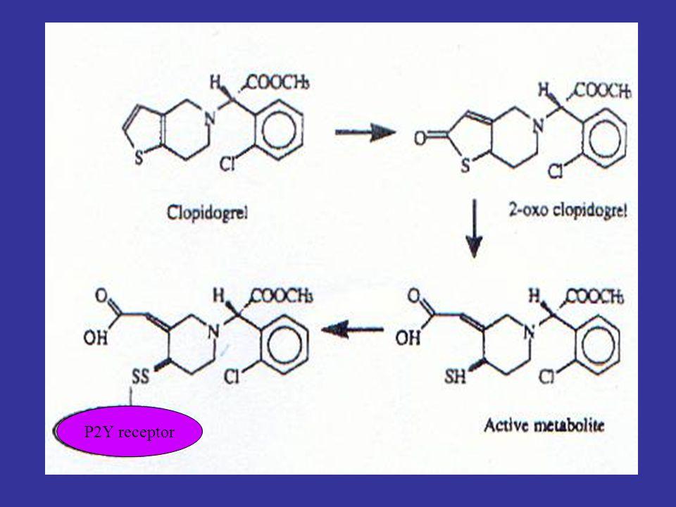 P2Y receptor