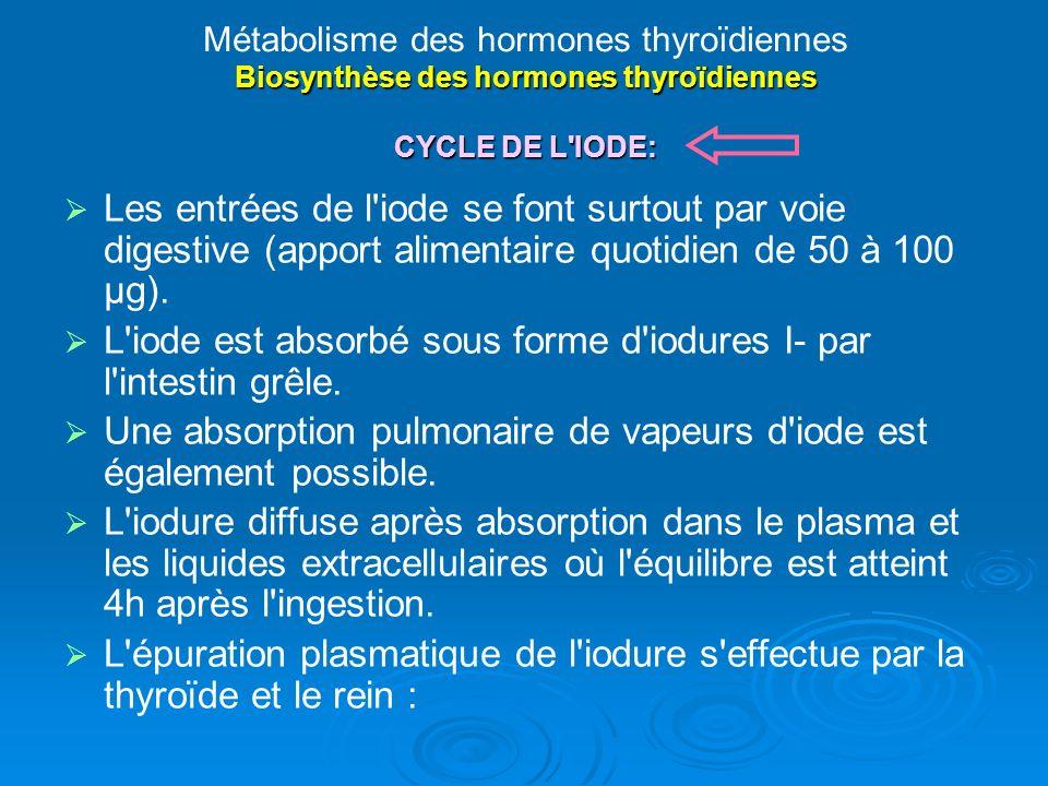 L iode est absorbé sous forme d iodures I- par l intestin grêle.