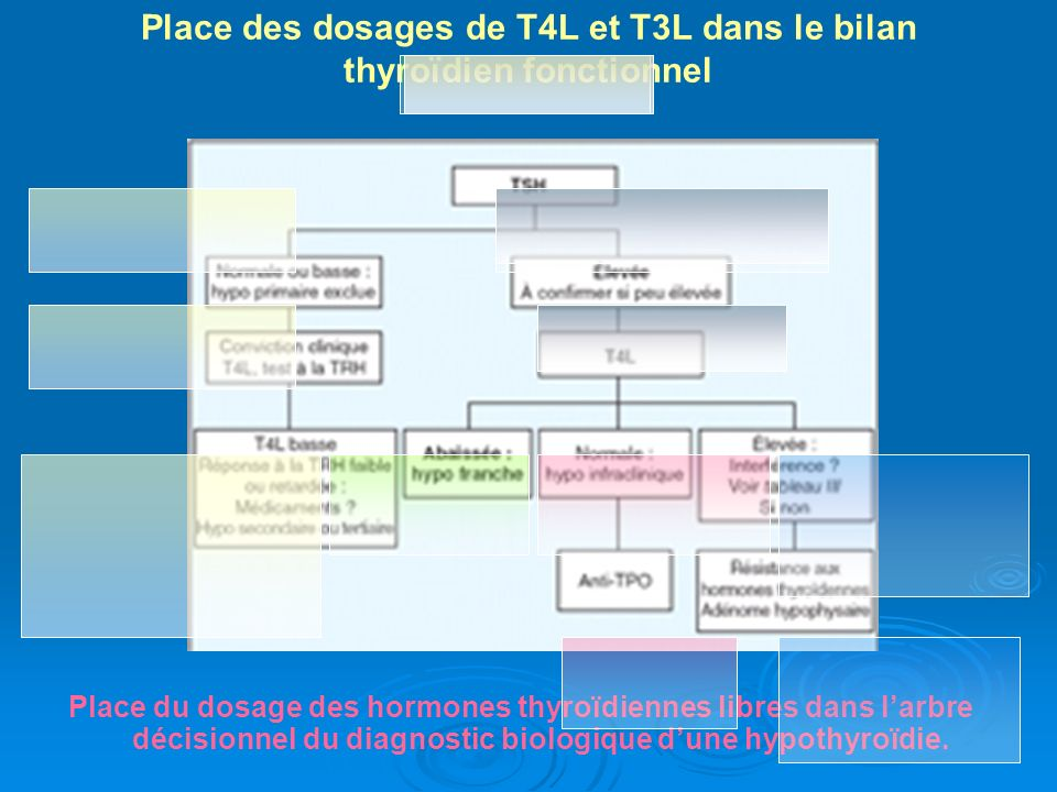Place des dosages de T4L et T3L dans le bilan thyroïdien fonctionnel