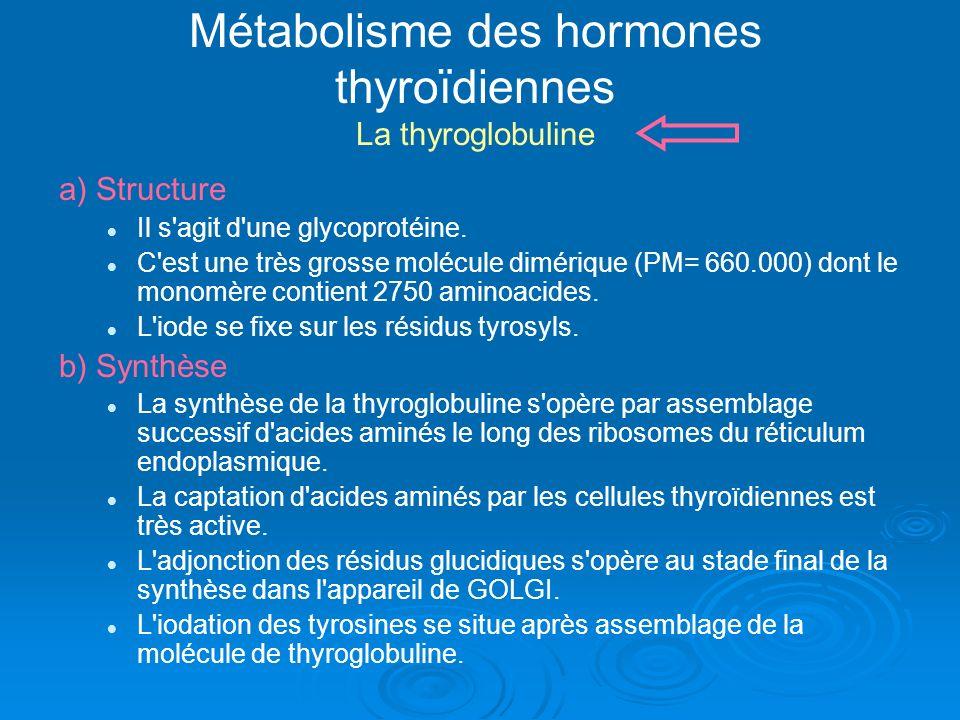 Métabolisme des hormones thyroïdiennes La thyroglobuline