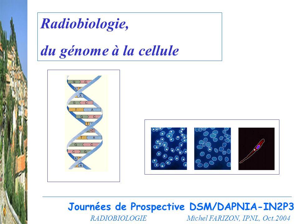 Radiobiologie, du génome à la cellule