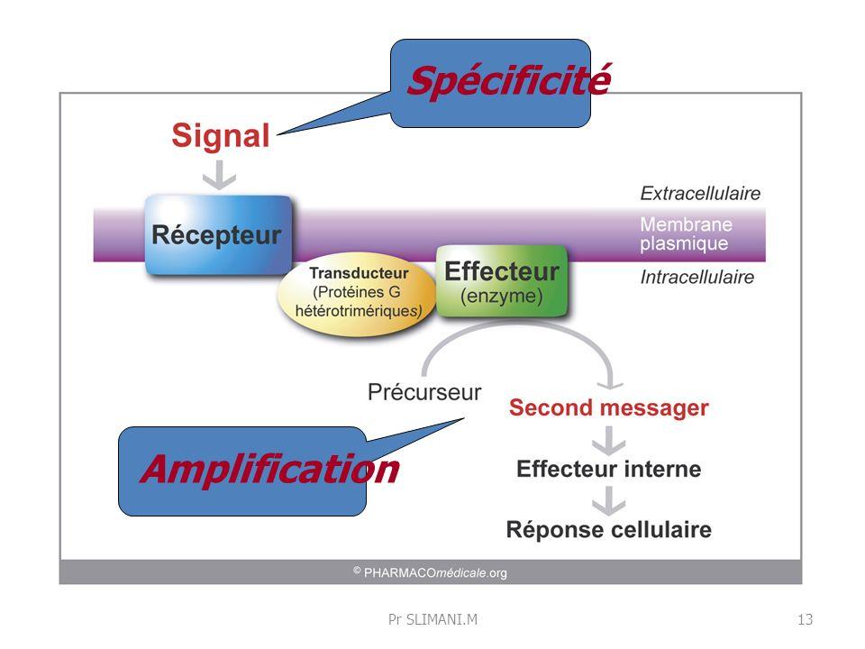 Spécificité Amplification Pr SLIMANI.M