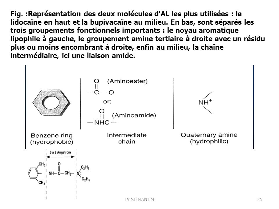 Fig. :Représentation des deux molécules d AL les plus utilisées : la lidocaïne en haut et la bupivacaïne au milieu. En bas, sont séparés les trois groupements fonctionnels importants : le noyau aromatique lipophile à gauche, le groupement amine tertiaire à droite avec un résidu plus ou moins encombrant à droite, enfin au milieu, la chaîne intermédiaire, ici une liaison amide.