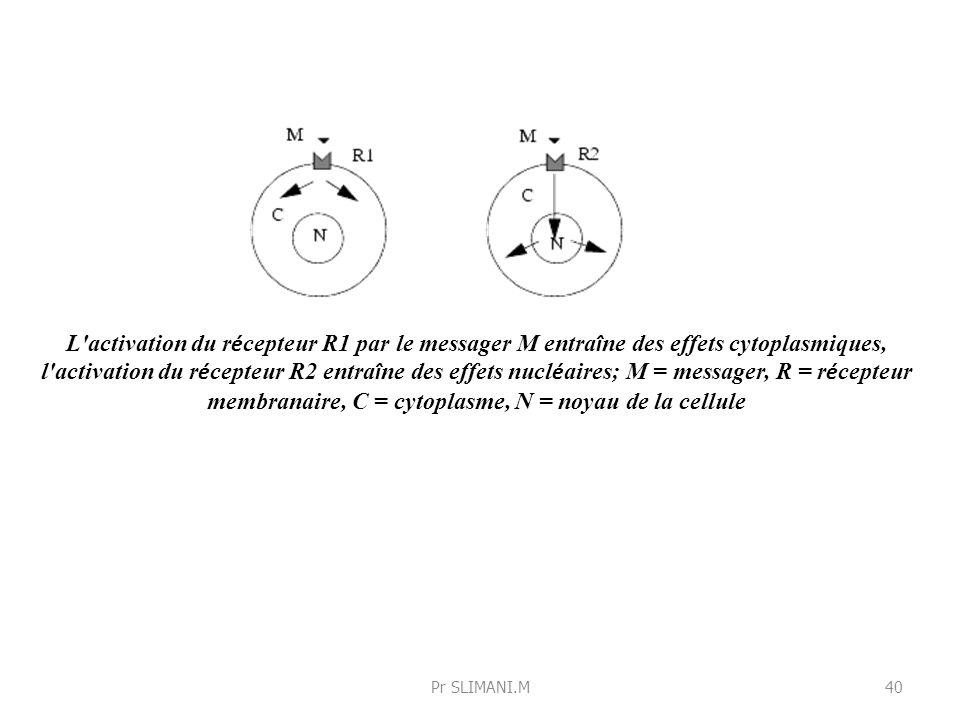 L activation du récepteur R1 par le messager M entraîne des effets cytoplasmiques, l activation du récepteur R2 entraîne des effets nucléaires; M = messager, R = récepteur membranaire, C = cytoplasme, N = noyau de la cellule