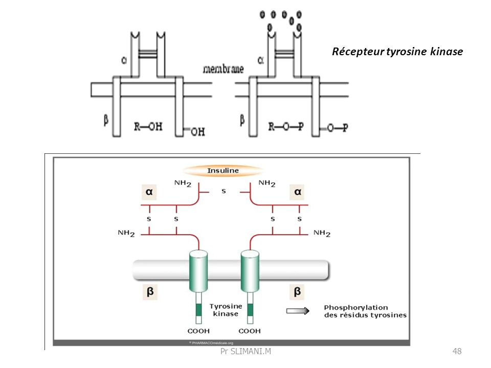 Récepteur tyrosine kinase