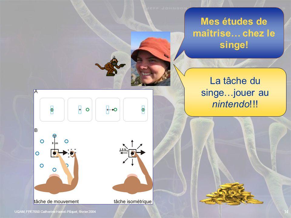 Mes études de maîtrise… chez le singe!