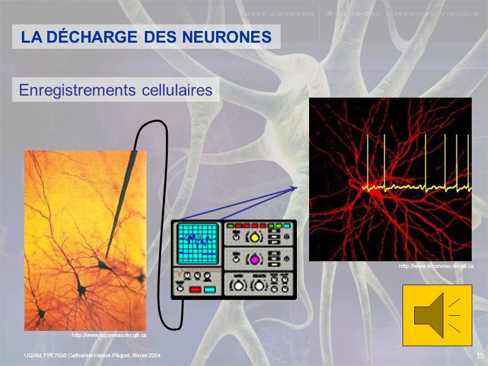 LA DÉCHARGE DES NEURONES