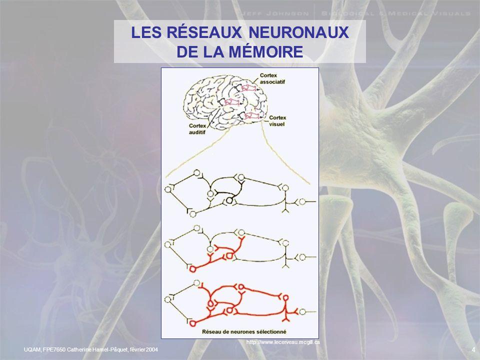 LES RÉSEAUX NEURONAUX DE LA MÉMOIRE