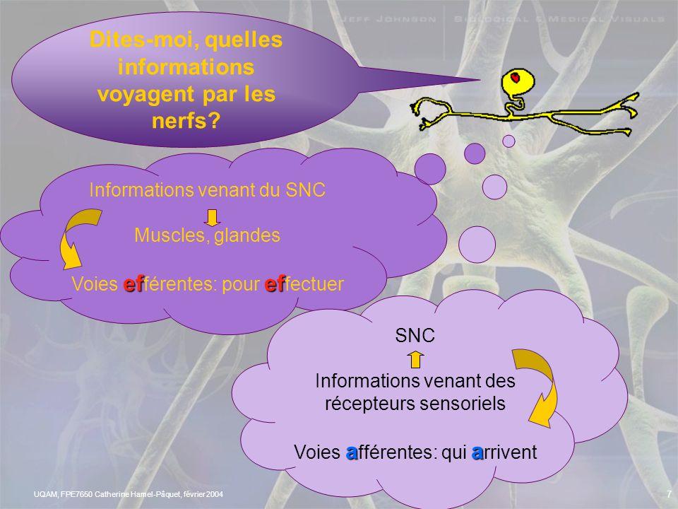 Dites-moi, quelles informations voyagent par les nerfs