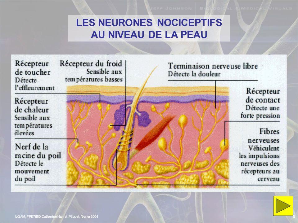 LES NEURONES NOCICEPTIFS AU NIVEAU DE LA PEAU