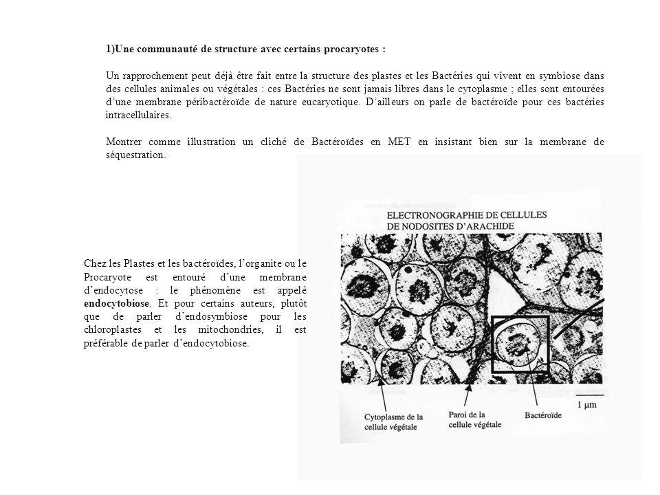 1)Une communauté de structure avec certains procaryotes :