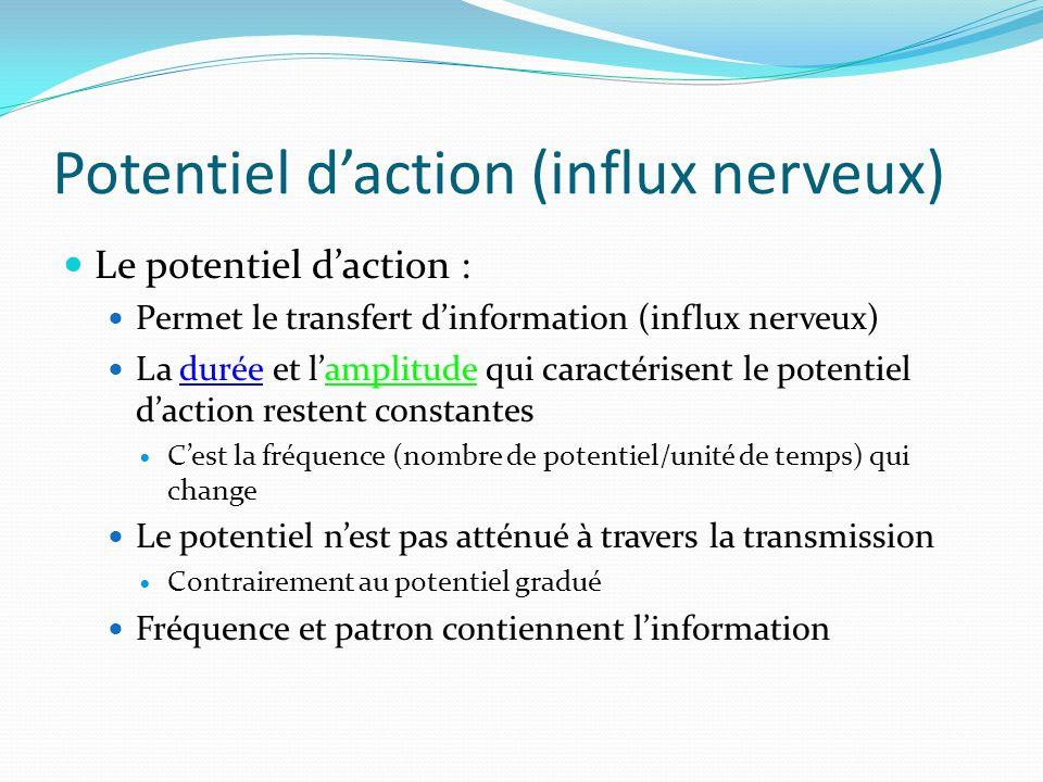 Potentiel d'action (influx nerveux)