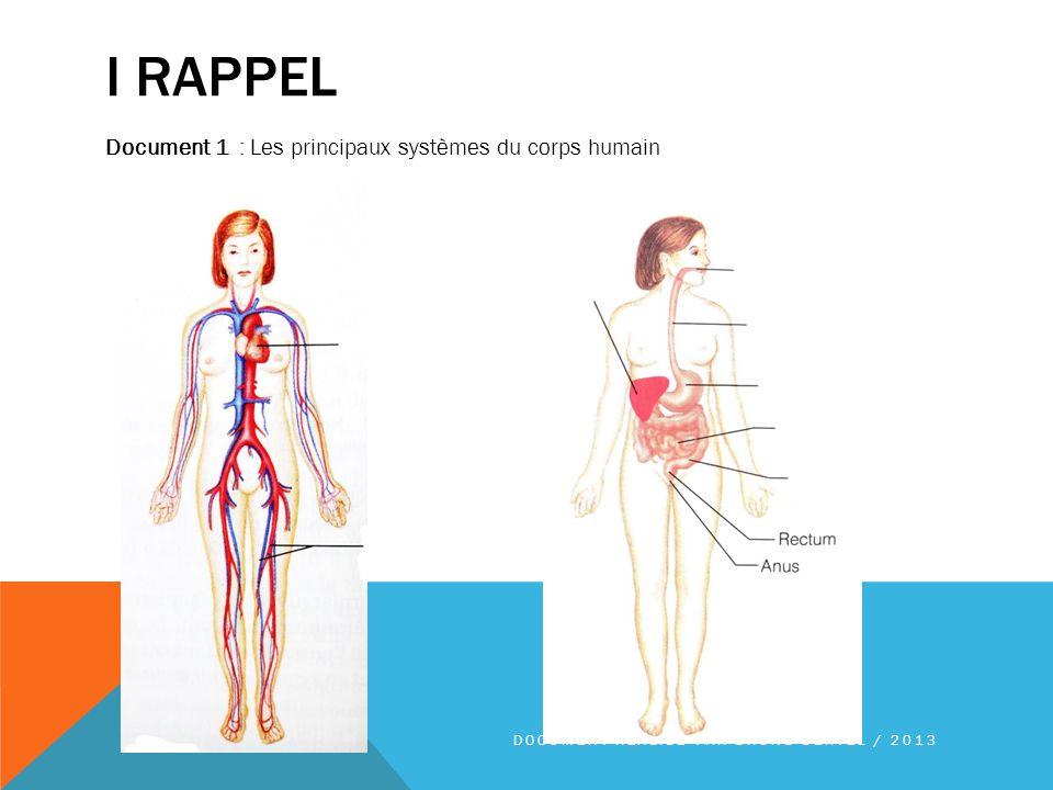 I rappel Document 1 : Les principaux systèmes du corps humain