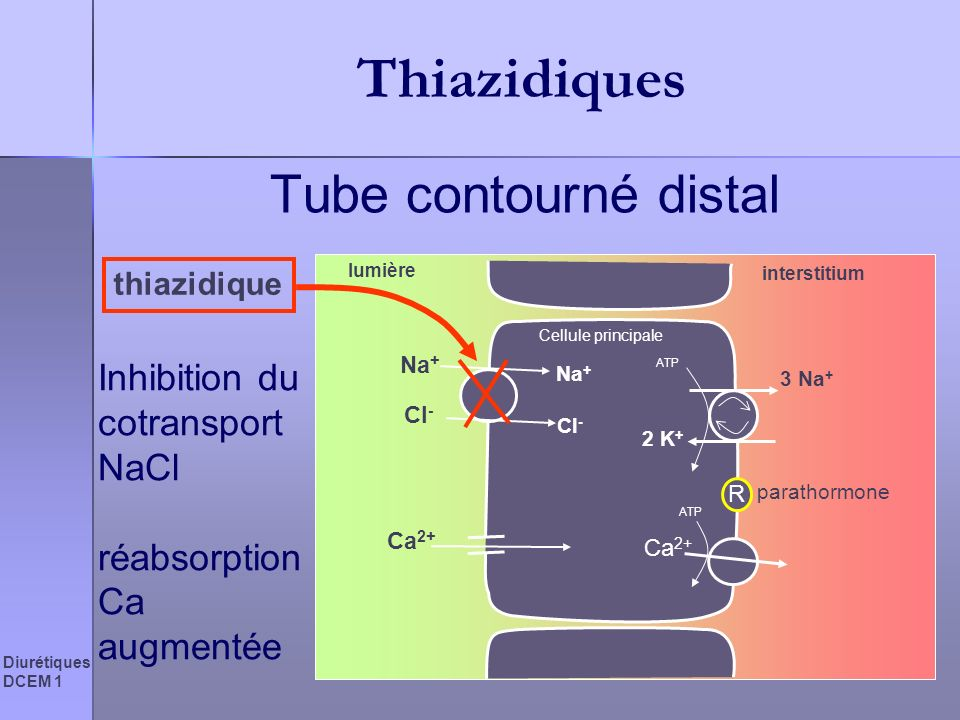 Thiazidiques Tube contourné distal Inhibition du cotransport NaCl