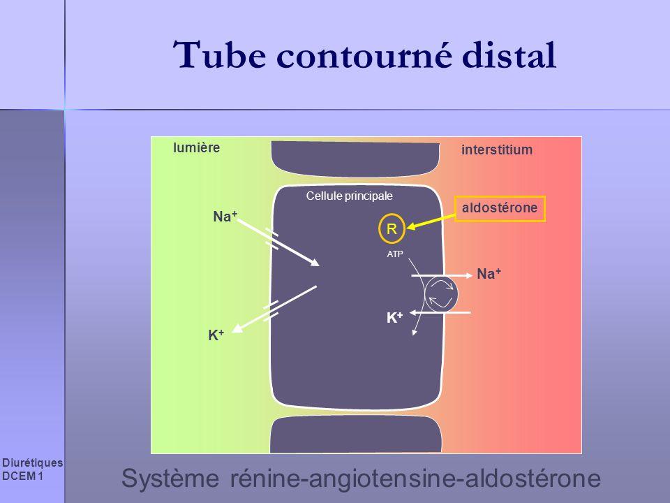Tube contourné distal Système rénine-angiotensine-aldostérone Na+ R