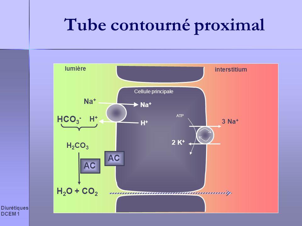 Tube contourné proximal
