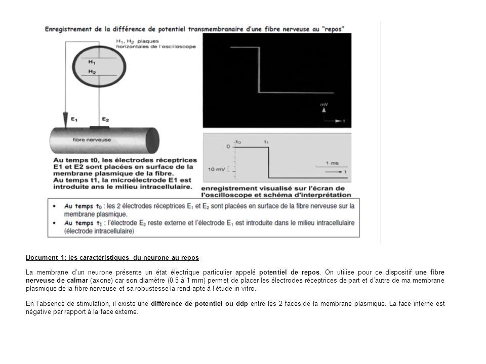 Document 1: les caractéristiques du neurone au repos