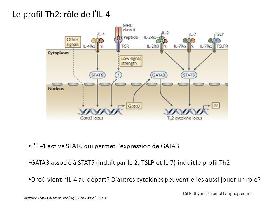 Le profil Th2: rôle de l'IL-4
