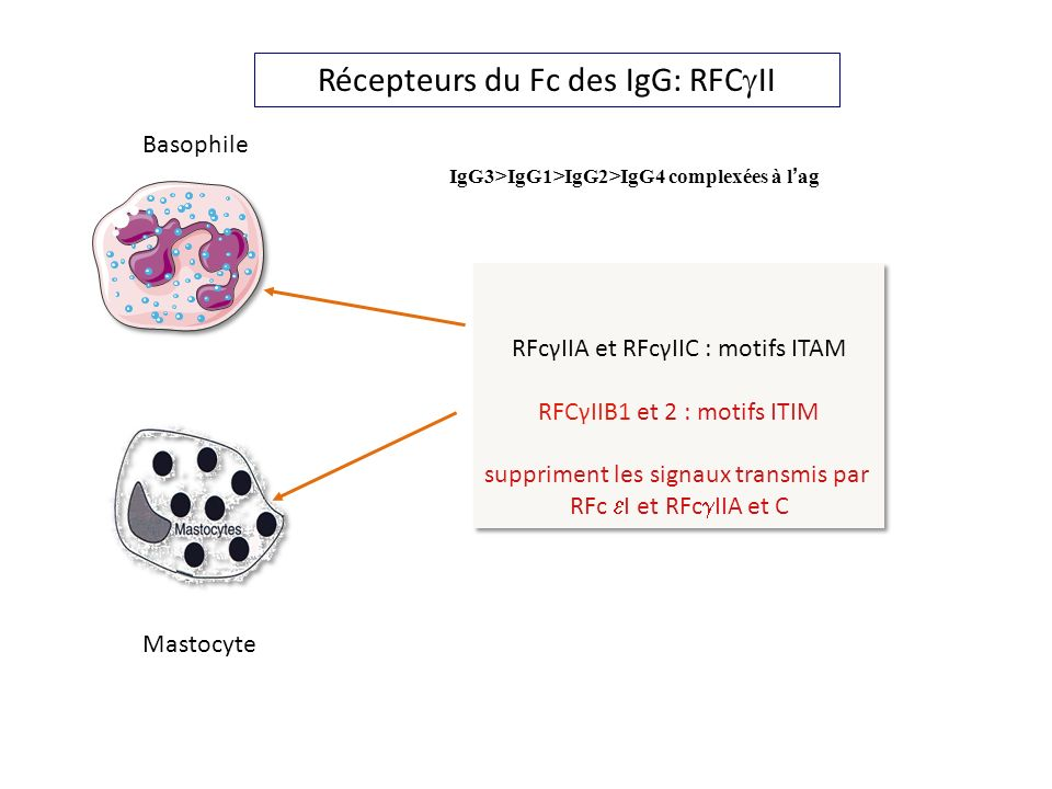 Récepteurs du Fc des IgG: RFCgII
