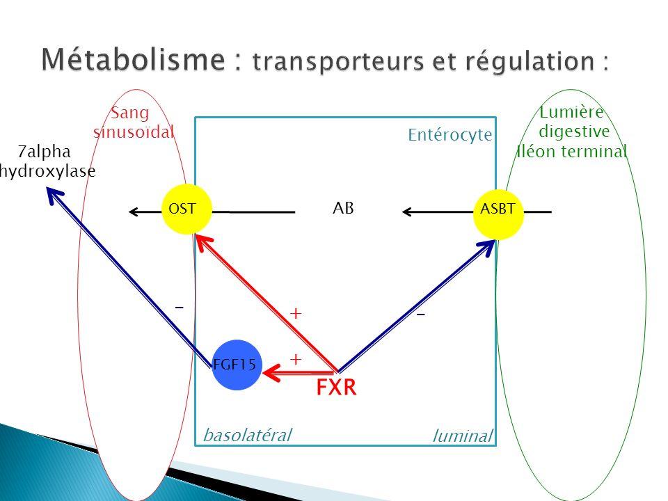 Métabolisme : transporteurs et régulation :