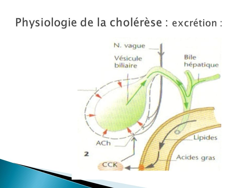 Physiologie de la cholérèse : excrétion :