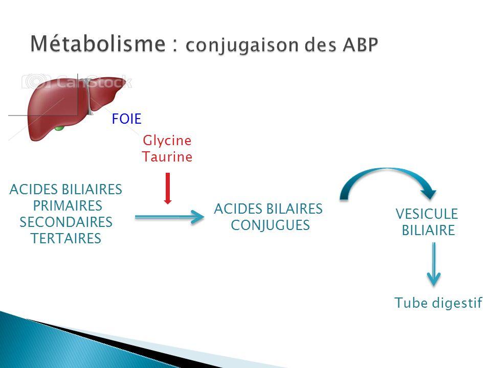 Métabolisme : conjugaison des ABP
