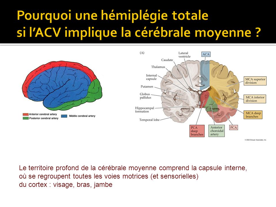 Pourquoi une hémiplégie totale si l'ACV implique la cérébrale moyenne